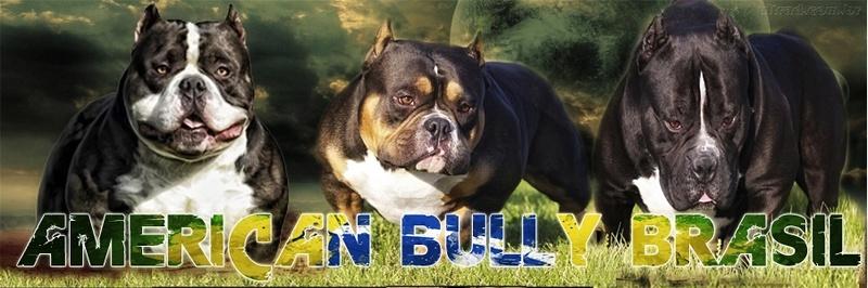 American Bully Brasil