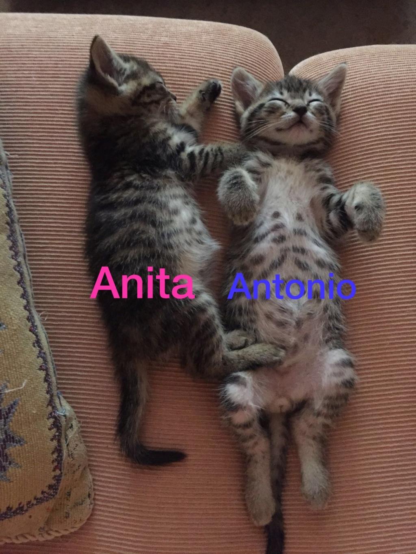 anita_12.jpg
