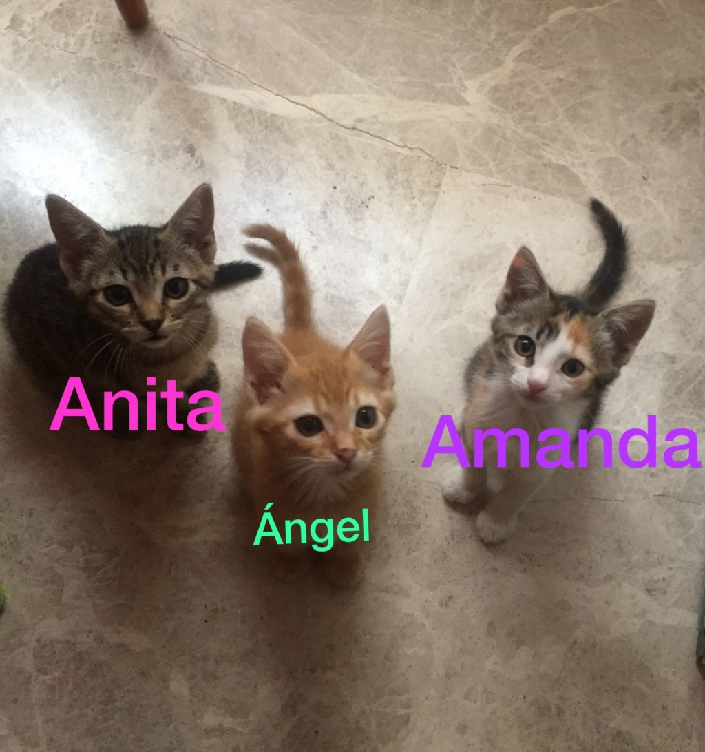 anita_14.jpg